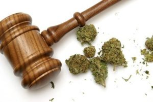 marijuana possession, west palm beach